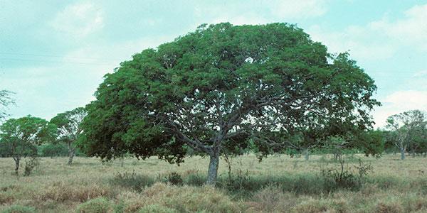 ТОП 5 элитных сортов древесины