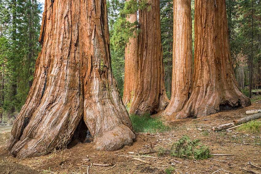 Обзор древесины Вавона. Характерные особенности и применение материала